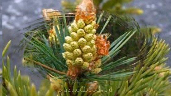Народная медицина травы