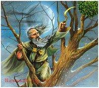 Омела считалась священным растением