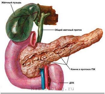 Как лечить хрящевой ткани