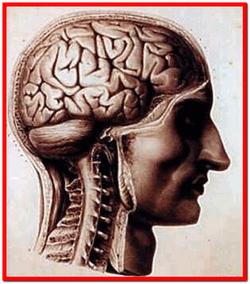 Болезни нервной системы лечение