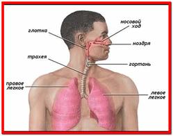 Болезни органов дыхания лечение