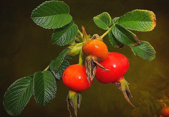 Другие лекарственные растения