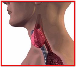 Гипотиреоз щитовидной железы лечение