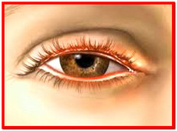 Глазные болезни. Лечение народными средствами