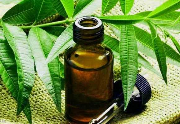 Лечение демодекоза маслом чайного дерева