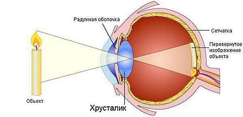 Mehanizm-razvitija-miopii