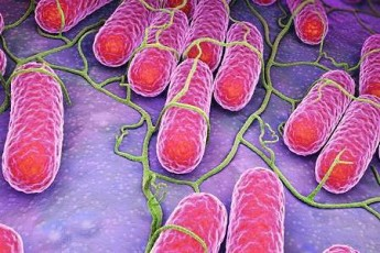 Сальмонеллез. Лечение сальмонеллеза у взрослых в домашних условиях