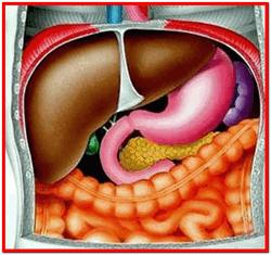 Жировой гепатоз печение лечение