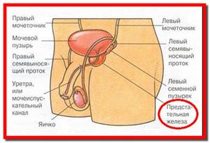 Лечение простатита в новосибирске цена