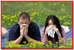 Сенная лихорадка. Симптомы и лечение сенной лихорадки